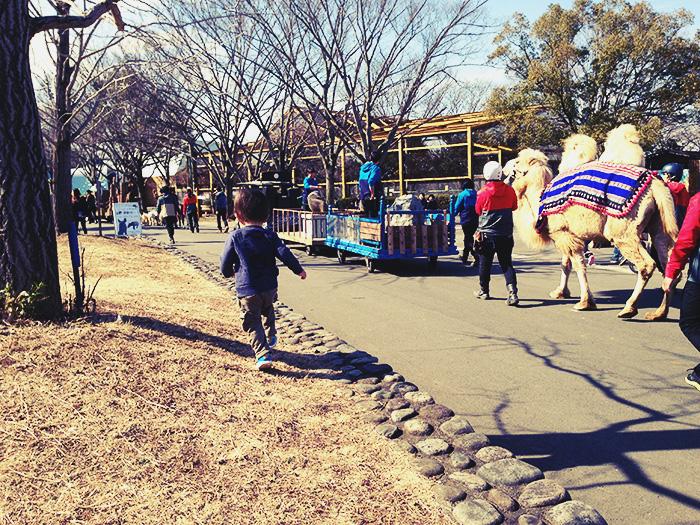 東武動物公園のパレード