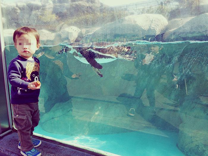 東武動物公園のペンギン